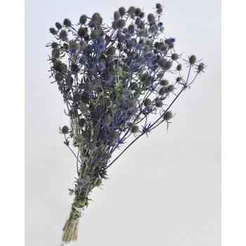 Eryngium bleu séché