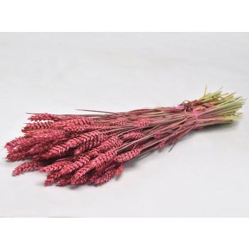 Blé séché coloré rose foncé d'une longueur de 70 cm