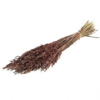 Avoine séchée teint en brun (Avena)